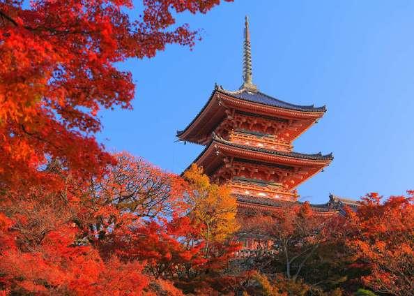 Musim Gugur di Jepang (source)